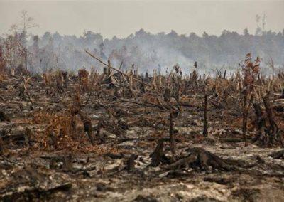 deforestazione 3