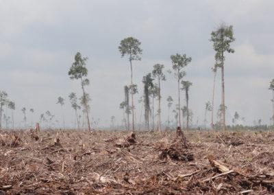 deforestazione 5