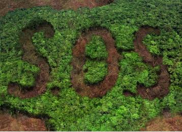 deforestazione 6