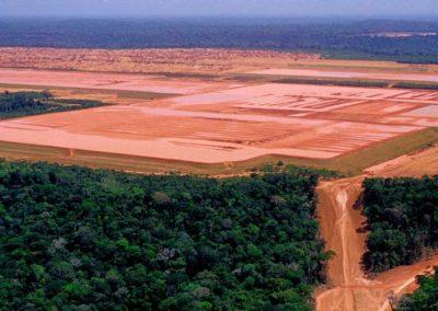 deforestazione tropicale