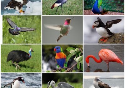 Bird_Diversity