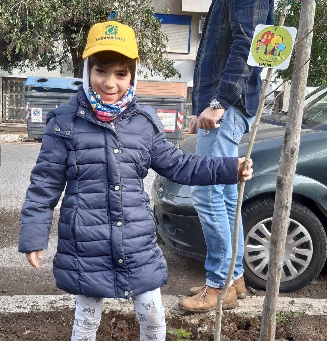 Nuovi alberi in via Accademia degli Agiati